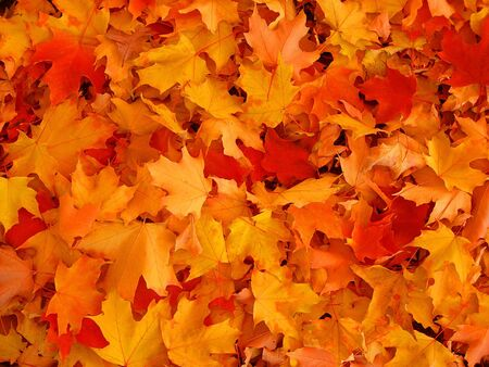 red carpet background: Autumn leaves. Stock Photo