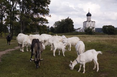 Landscape with goats and a church.