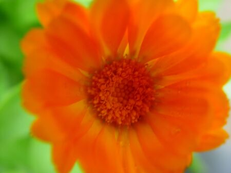 An abstract close-up of an orange gerbera. Shallow depth-of-field. photo