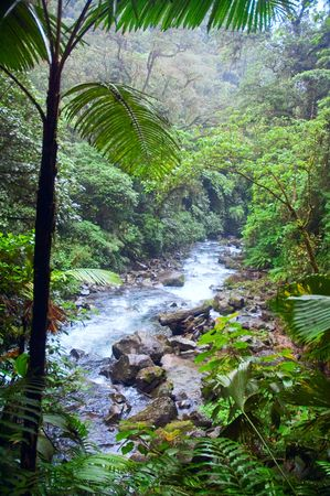 Tropical rainforest with mountain river. Costa Rica.