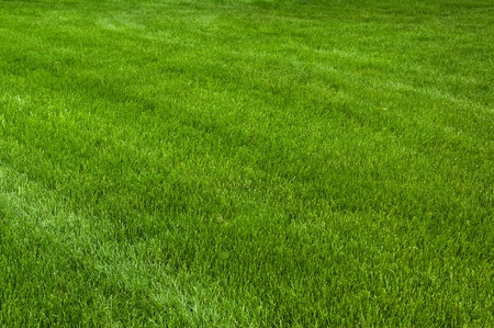 Neatly cut grass. Full frame short with wide depth of field. Stock Photo