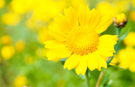 daisy flower on a summer day Stock Photo - 17378970