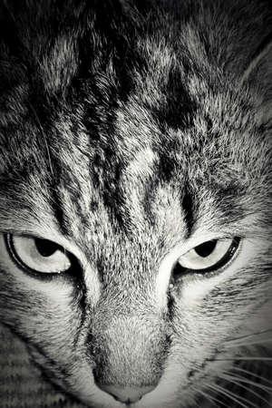 Close up portrait of cat  eye