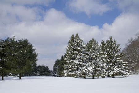 Freshly fallen snow covers trees and field Stock Photo - 8011597