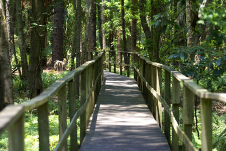 A wooden boardwalk in a tropical forest Stock Photo - 8583417