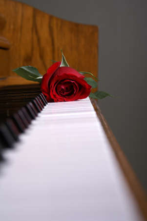 A red rose laying on the piano keys Stock Photo - 8583424