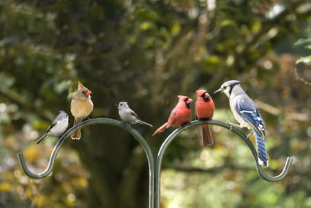 Birds of different feathers flockng together. A metaphor for diversity. photo