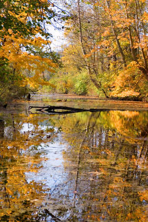 Trees with colorful fall foliage reflected in a stream Stock Photo - 10727604
