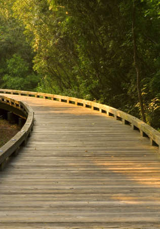 A wooden walking path curving into the sunlight Stock Photo - 13265232