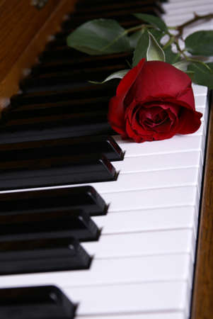 A beautiful red rose laying on piano keys photo