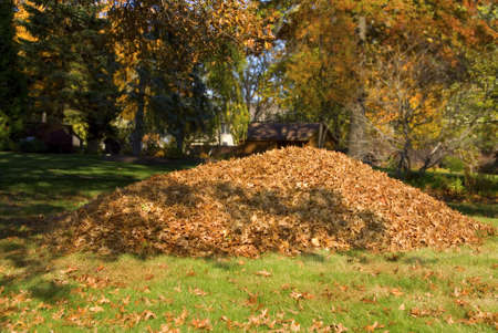 pile of leaves: A large pile of leaves in the fall Stock Photo