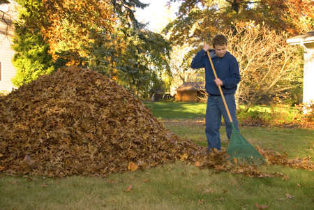 A teen boy raking leaves in the fall.