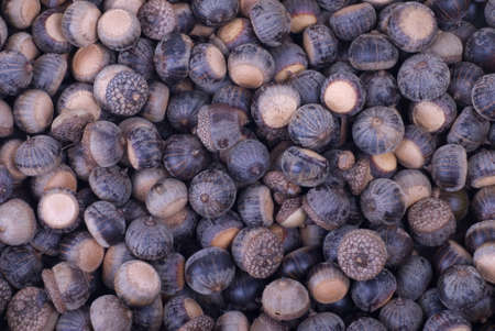 A background image of many brown acorns.