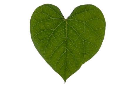 A heart shaped leaf on a white