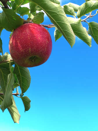 An apple hanging on a tree against a blue sky