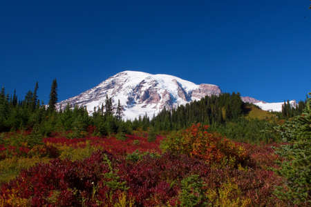 Mount Rainier in Washington over autumn foliage and evergreens.