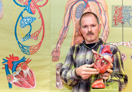 blood circulation: Biology teacher showing human heart model in front of wallchart with blood circulation for education