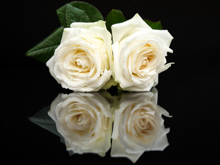 mirror image: Two white roses with mirror image isolated on black background Stock Photo