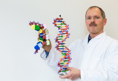 nucleic acid: Biologist in lab coat showing DNA and mRNA model for education isolated on grey white background Stock Photo
