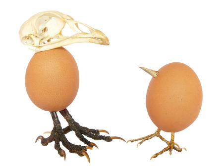 beaks: Two standing chicken eggs as birds with legs and beaks