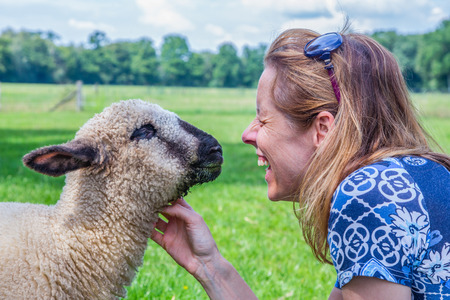 Caucasian woman and sheep heads together and fondle the farm animal Stockfoto