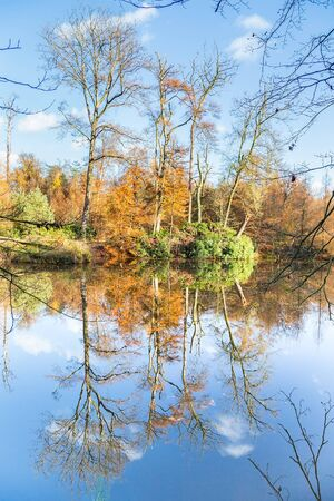 mirror image: Autumn  forest with mirror image in water of pond on sunny day