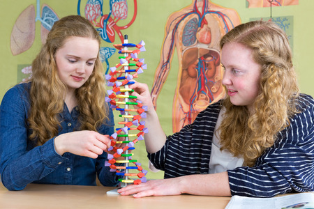Two teenage girls studying human DNA model in biology lesson 写真素材