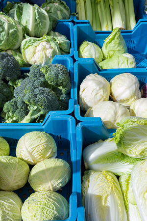 lactuca: Assortment of green with white cabbages as vegetables in blue crates on market Stock Photo