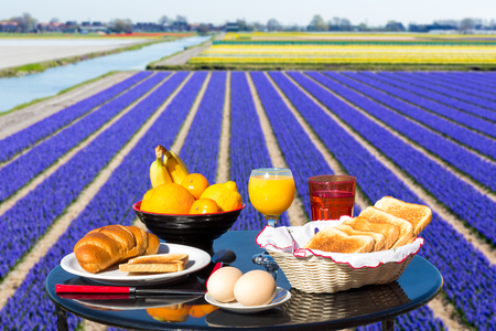 flowers field: Table with food and drink near flowers field in keukenhof Holland