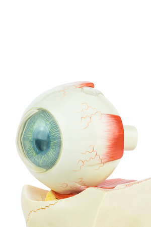 artificial model: Artificial model of fhuman eye isolated on white background Stock Photo