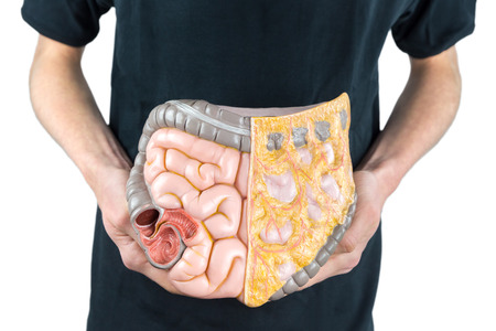 Man holding model of human intestines or bowels on black shirt isolated on white background Stockfoto