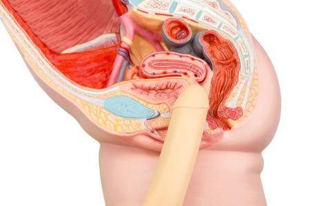 genitali: Umana pene rapporto sessuale e il modello della vagina Archivio Fotografico