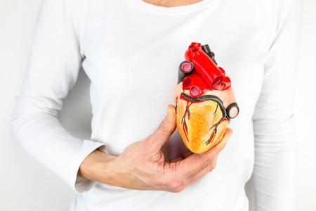 female hand holding human heart model