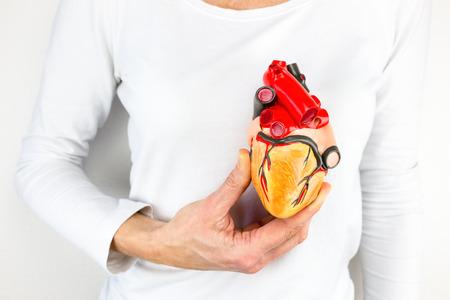 female hand holding human heart model