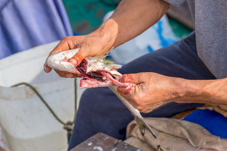 guts: Fisherman removing intestines to prepare fish for food