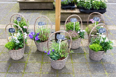 flowering plants: Various reed baskets with flowering plants on ground Stock Photo