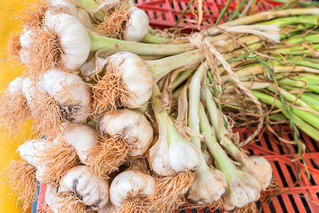tied together: Bunch of garlic bulbs with stalks tied together with a rope