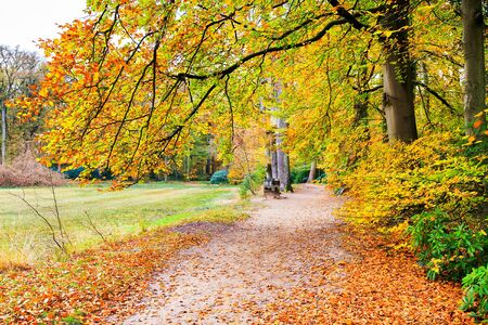 beech tree: European fall landscape with footpath and beech tree leaves Stock Photo