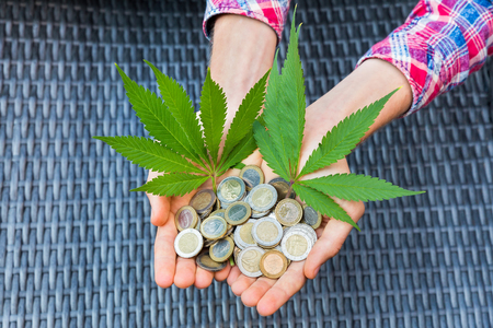 Hands holding euro money and hemp leaves