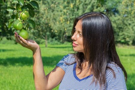 Woman appreciating and looking at pears in orchard