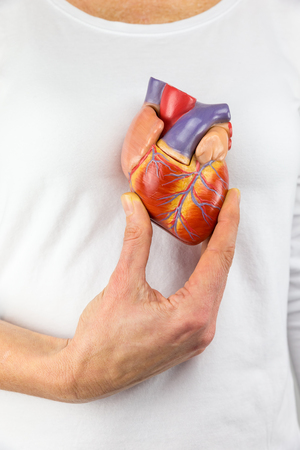 Female hand showing artificial heart model in front of human body Stockfoto