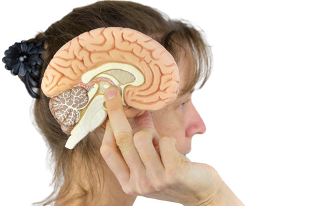 Woman holding brain model against head isolated on white background