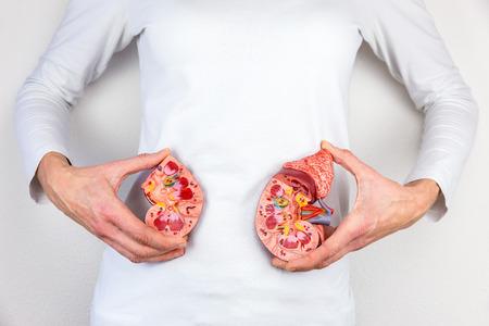 donacion de organos: Mujer que sostiene el modelo mitades de riñón humano en cuerpo blanco