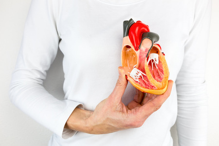 Female hand holding open human heart model at body Stockfoto