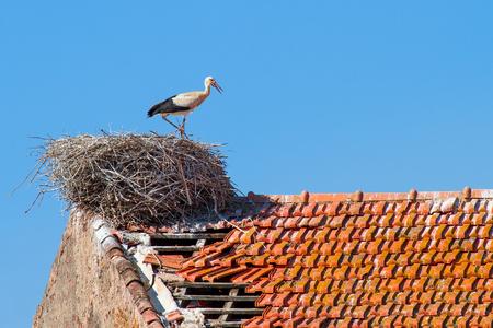 親コウノトリは、青空と建物の巣に立っています 写真素材