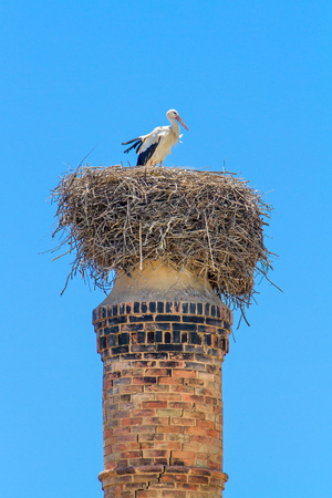 Parent stork in nest on chimney with blue sky