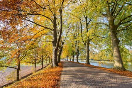 European road and river with beech trees in autumn Stock Photo