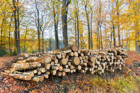 Stack of tree trunks lying in fall forest Stock Photo