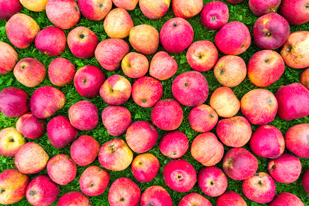 Group of red yellow apples on green grass Stock Photo