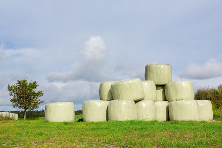 Group of plasticized hay bales in pasture Stock Photo
